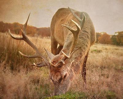 Deer II Poster by Violet Gray