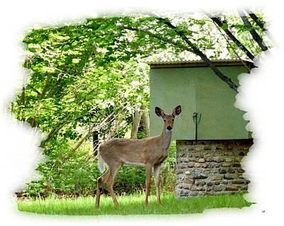 Deer In A Hazelnut Grove Poster by Will Borden