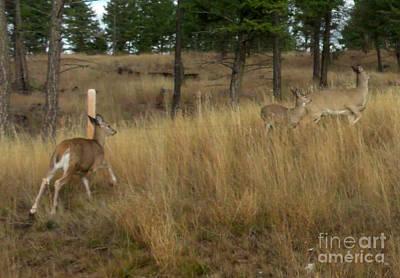 Deer On The Run Poster by Gail Matthews