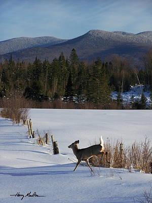 Deer Run Poster