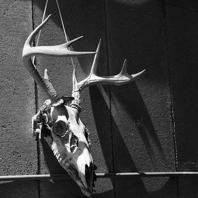 Poster featuring the photograph Deer Skull by Brooke T Ryan