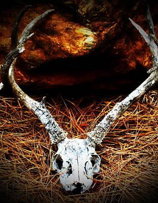 Deer Skull Poster by Christina Ochsner