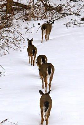 Deer Trail Poster