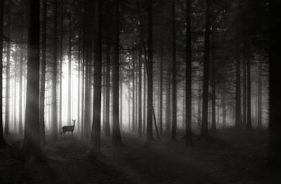 Deer`s Morning Poster