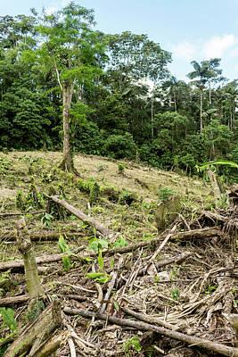 Deforestation In The Ecuadorian Amazon Poster