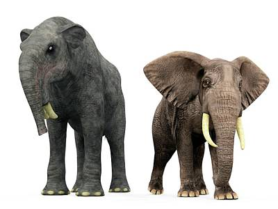 Deinotherium And Elephant Compared Poster by Walter Myers