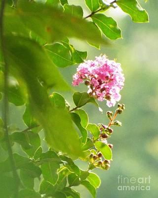 Delicate Blossom Poster