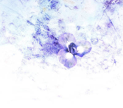 Delicate Flower In Blue  Poster