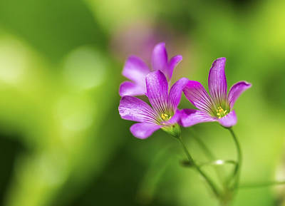 Delicate Purple Wildflowers Poster