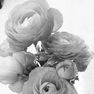 Delicate Ranunculus Poster