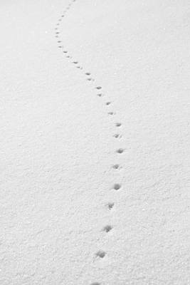 Delicate Tracks In The Snow Poster