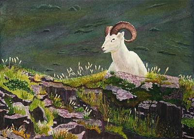 Denali Dall Sheep Poster