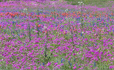 Dense Phlox And Other Wildflowers Poster