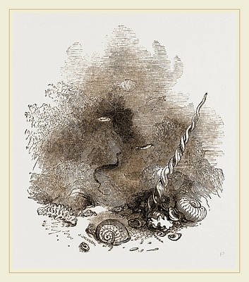 Depths Of The Sea Poster by Litz Collection