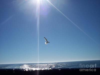 Descending Gull Poster