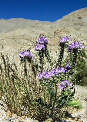 Desert Blooms Poster