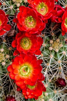 Desert Blooms Poster by Teri Virbickis
