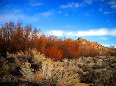 Desert Colors Poster by Marilyn Diaz