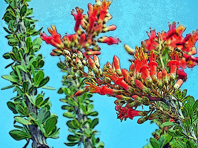 Desert Coral Poster