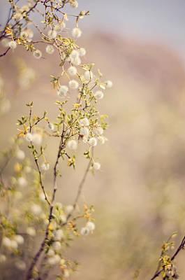 Desert Delicates Poster