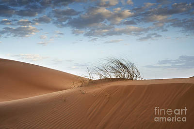 Desert Detail Poster by Yuri Santin