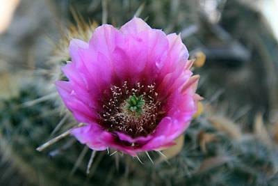 Desert Flower 1 Poster