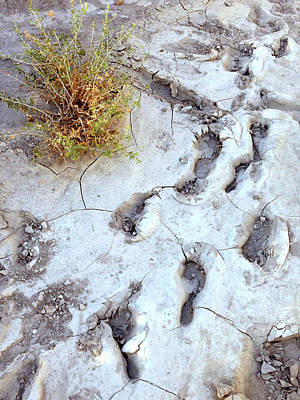 Desert Footprints Poster