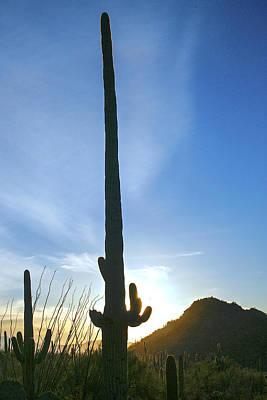 Desert Giant Poster