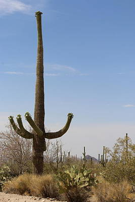 Desert Landscape With Saguaro Poster by Christiane Schulze Art And Photography