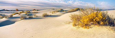 Desert Plants In A Desert, White Sands Poster by Panoramic Images