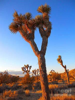 Desert Poet Poster