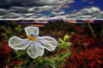 Poster featuring the digital art Desert Primrose 1 by William Horden