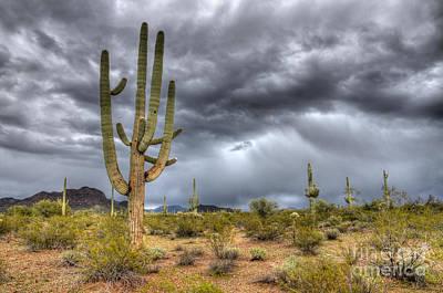 Desert Storm Arizona 2 Poster by Bob Christopher