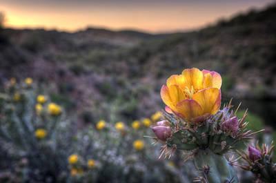 Desert Sunset Blossom Poster