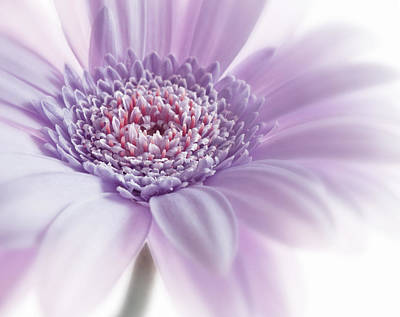 Poster featuring the photograph Close Up White Pink Flowers Macro Photography Art by Artecco Fine Art Photography