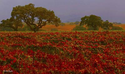 Detail Autumn Vineyard Santa Ynez California  Poster