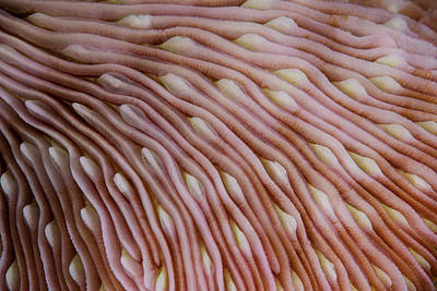 Detail Of The Texture On A Mushroom Poster