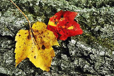 Deux Feuilles Poster by JAMART Photography