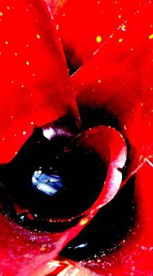 Devilish Eye Of The Bromeliad Poster by Antonia Citrino