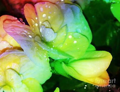 Dew Kissed Flower Poster
