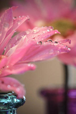 Dewdrops On Pink Poster by Christy Patino