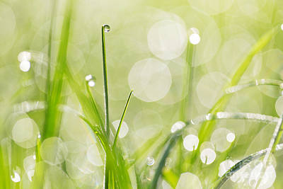 Dewdrops On The Sunlit Grass Poster by Natalie Kinnear