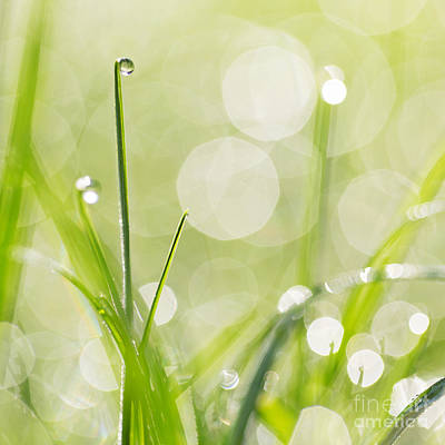 Dewdrops On The Sunlit Grass Square Format - Natalie Kinnear Pho Poster by Natalie Kinnear