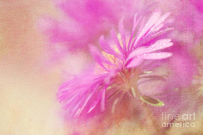 Dewy Pink Asters Poster by Lois Bryan