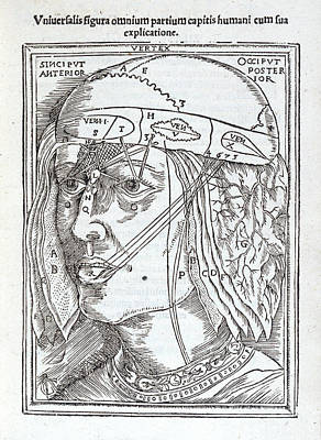 Diagram Of The Human Head Poster by British Library