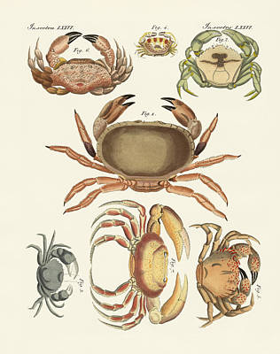 Different Kinds Of Crabs Poster by Splendid Art Prints