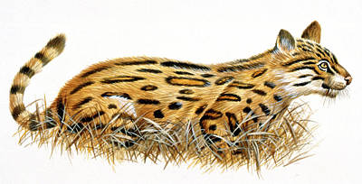 Dinictis Prehistoric Cat Poster by Deagostini/uig