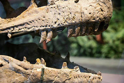 Dinosaur Jaws Exhibit Poster