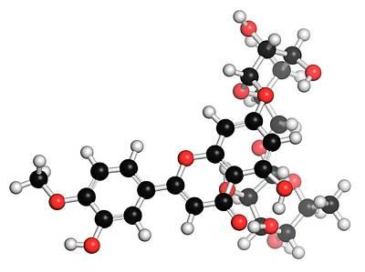 Diosmin Hemorrhoid Drug Molecule Poster
