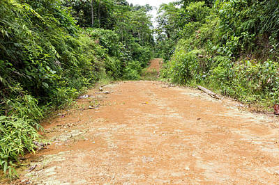 Dirt Road Leading Into The Rainforest Poster